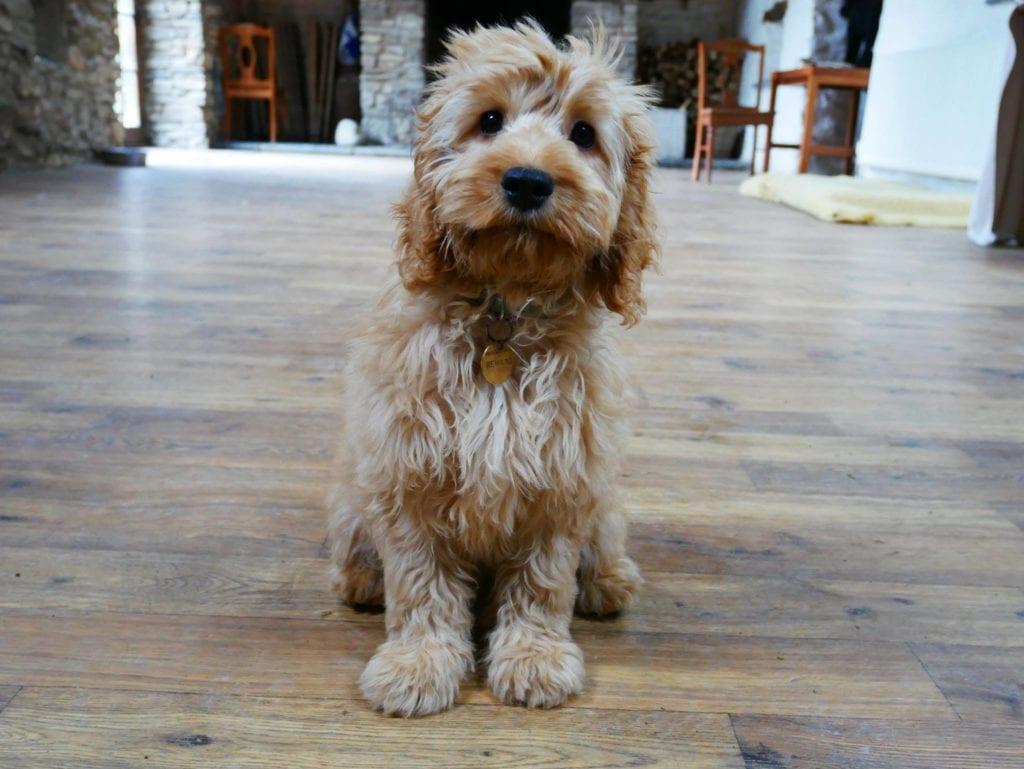 Puppy on wooden floor